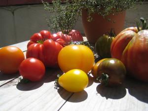 tomaten2015